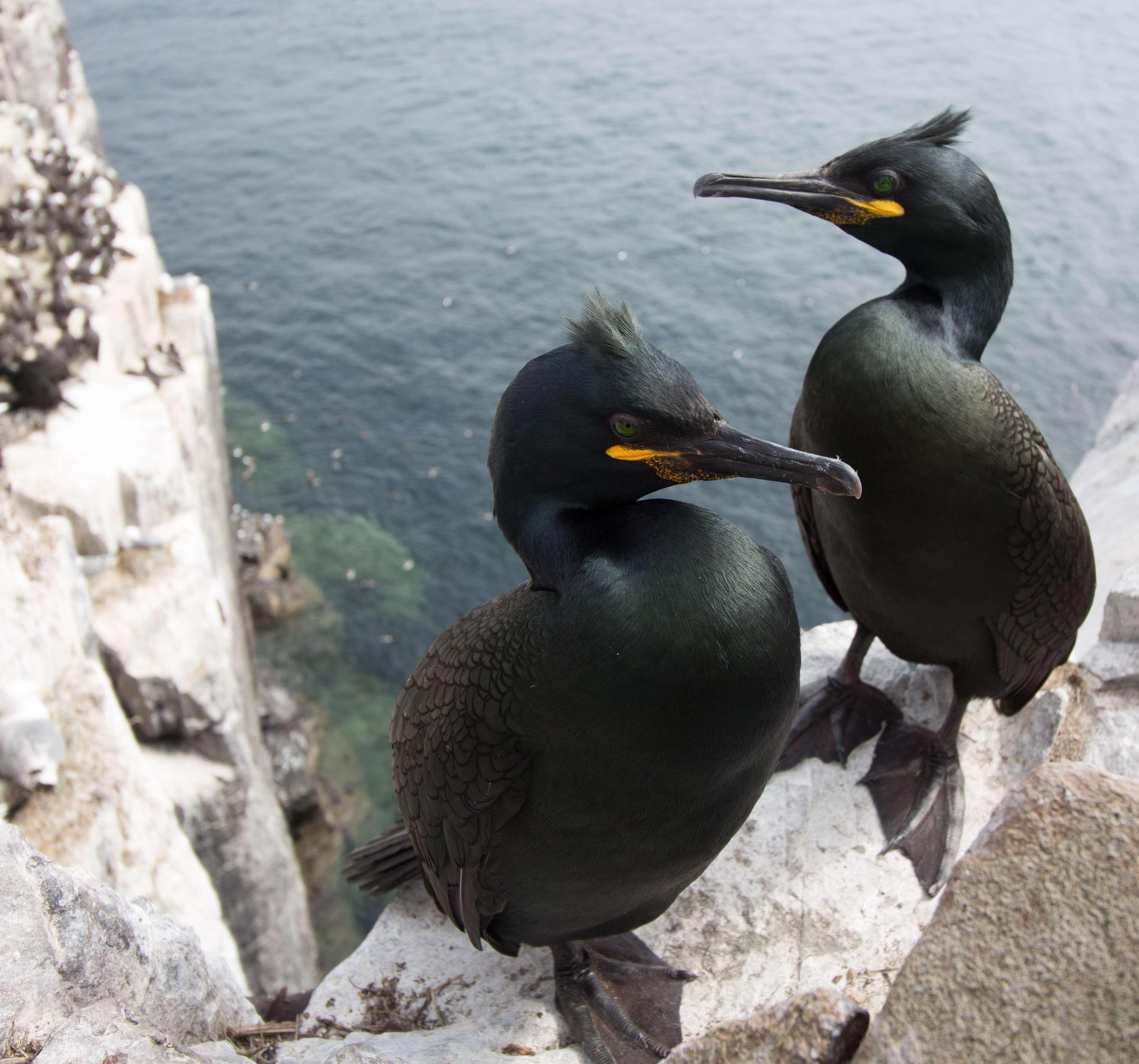 кашарель птица орнитология: 10 тыс изображений найдено в ...