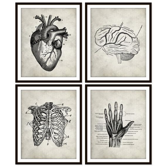Vintage Heart Anatomy Art Print, Rib Cage, Brain, Hand Skeletal ...