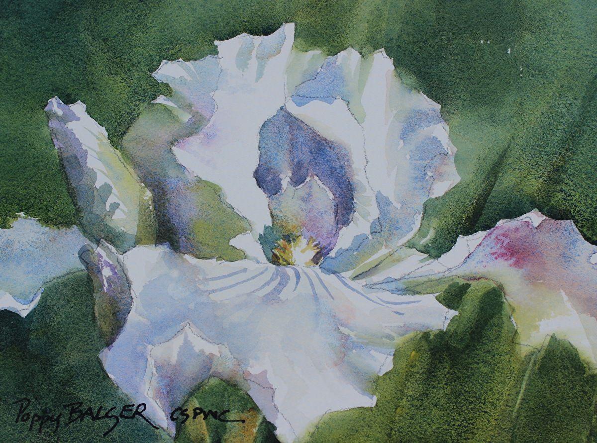 iris in october by poppy balser watercolor 5 x 7 iris and roses rh pinterest com