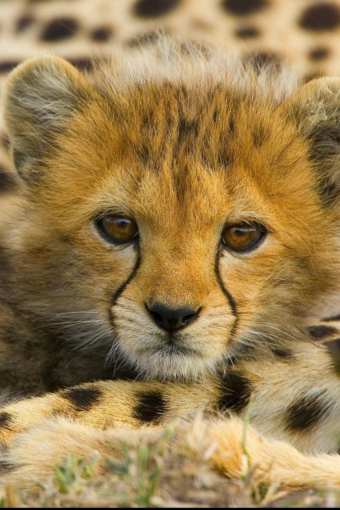 Pin By Bonnie Sugg On Animaux Sauvages Animals Animals Wild Cute Animals
