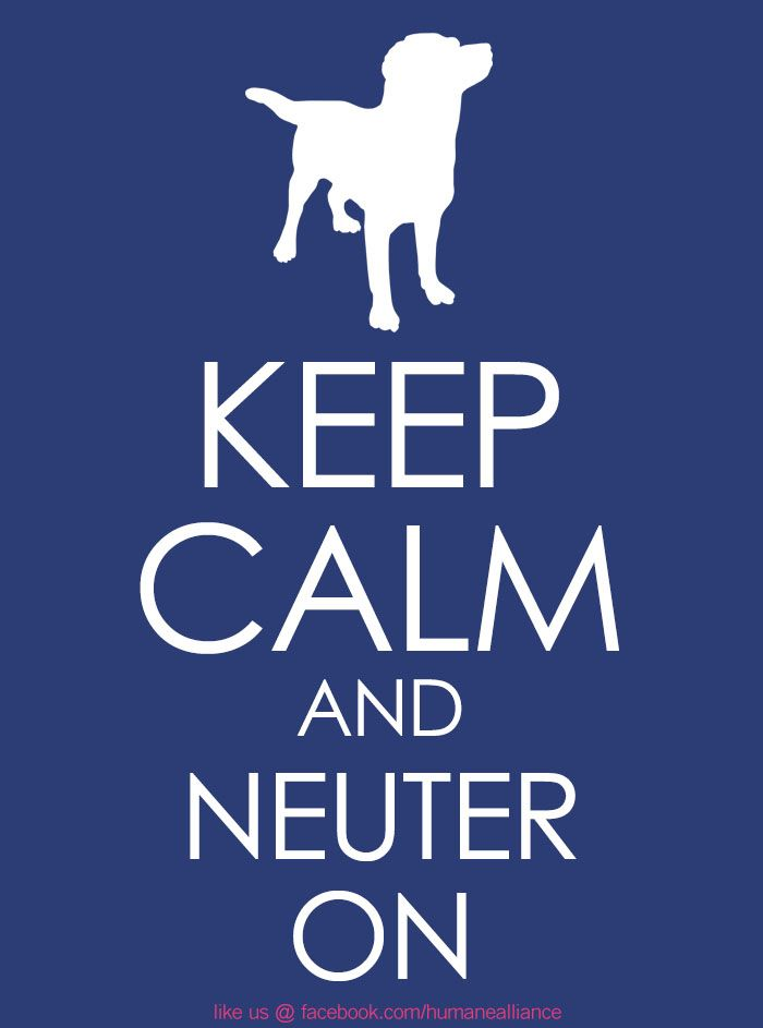 Pin By Christina Lea On Spay Neuter In 2020 Veterinary Humor Pet Vet Vet Tech