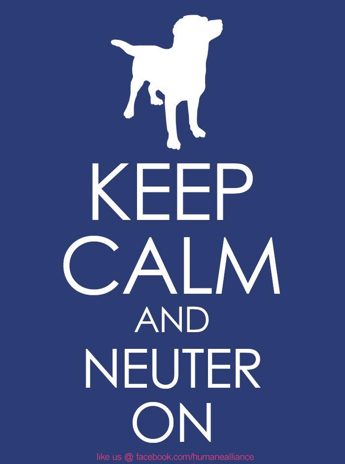 Keep Calm And Neuter On Neuter Humanealliance Org Vet Assistant Veterinary Humor Pet Vet