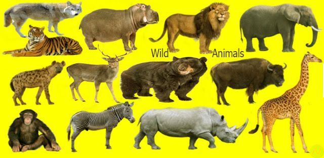 Learn 40 Wild animals Name with Relevant Necessary ...