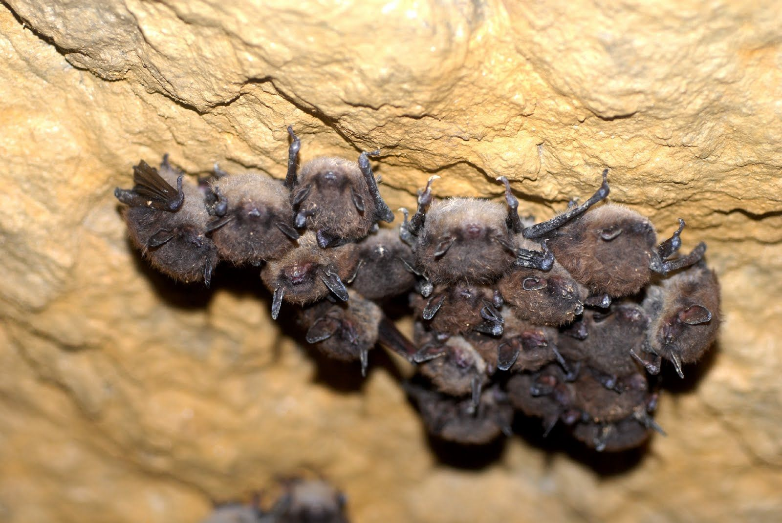 Bat Facts For Kids With Images