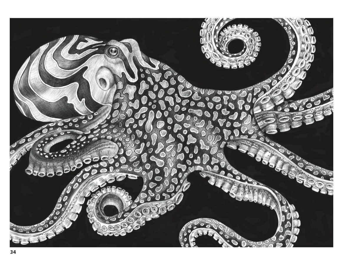 intricate ink animals in detail coloring book - Intricate Coloring Books