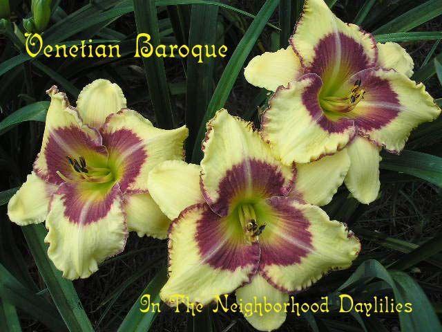 Venetian Baroque (Morss, 2000)-Daylily Venetian Baroque;Morss Daylily;Pearl Yellow w' Wild Berry Eye & Dark Cherry Edge Daylily;Daylily Picture;Perennials;Award Winning Daylily;Extra Early Season Daylily;Reblooming Daylilies