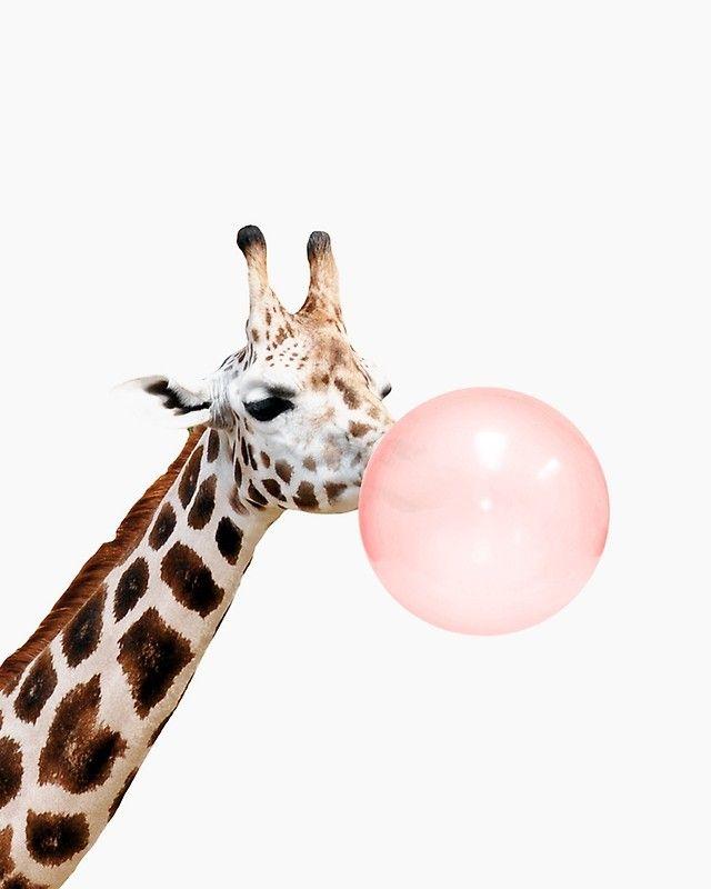 Giraffe Print, Bubble Gum, Nursery Art, Giraffe Wall Art, Animal, Kids Room, Modern Art, W Art Print by juliaemelian