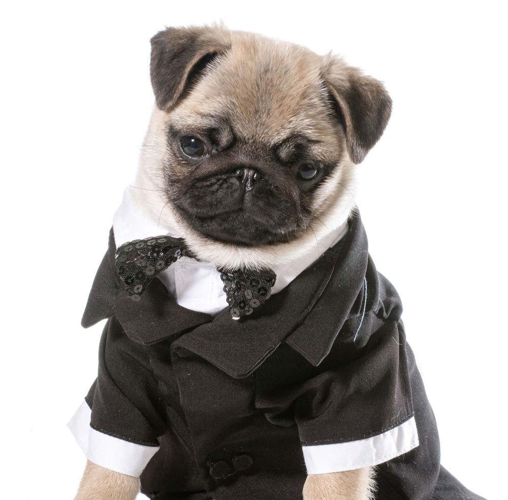 Birthday Card Tuxedo Pug Puppy Dog With Same Day Despatch FREE