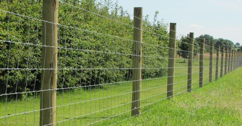 fencing using field fencing   SHEEP - Essex Field Fencing - field