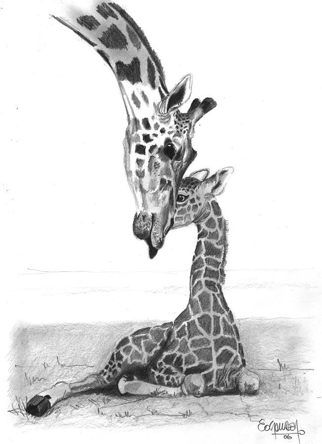 Jungle Anmals Pencil Drawings Mother Giraffe And The Baby