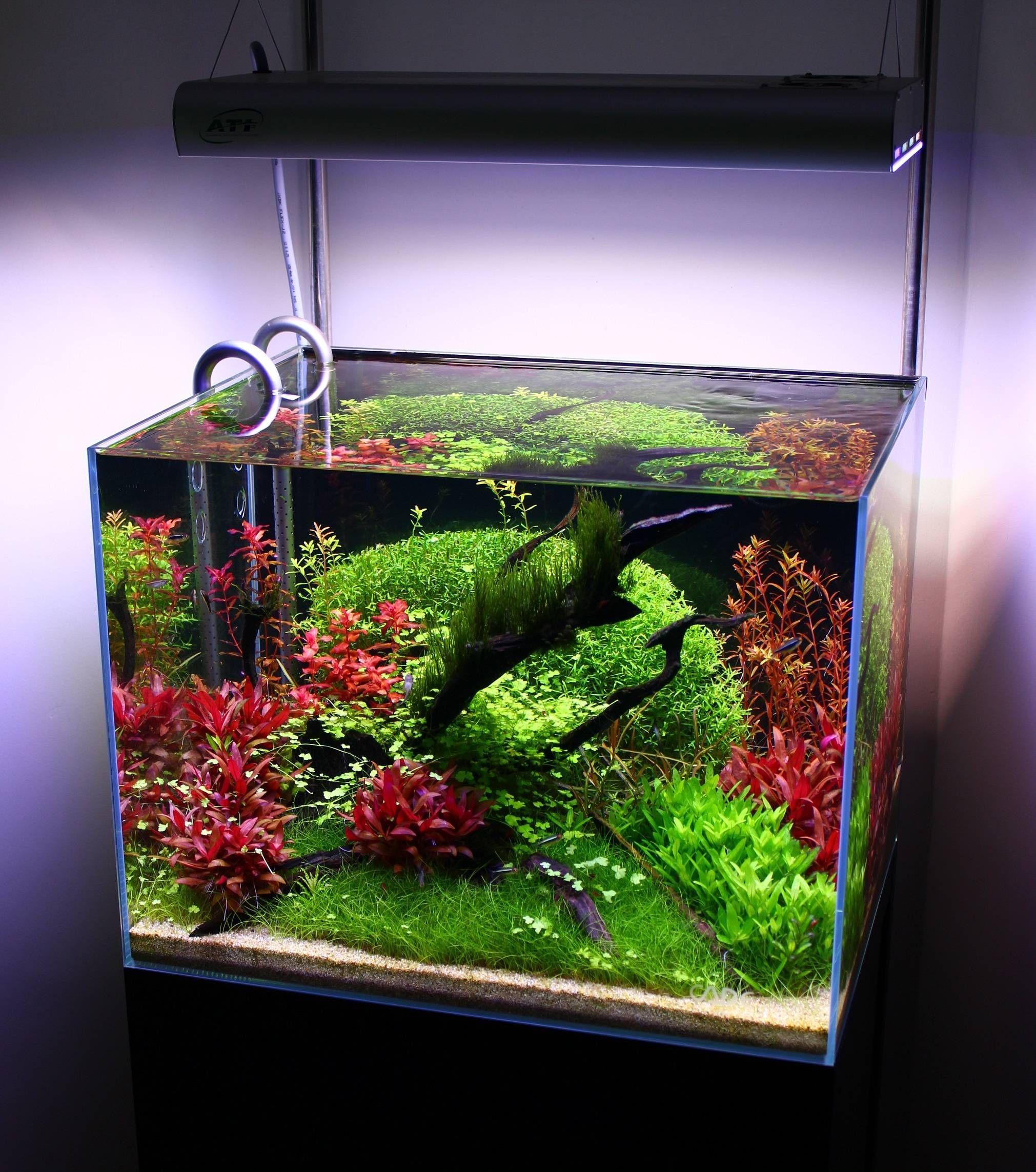 Freshwater aquarium fish nano - Red And Green Planted Tank Planted Aquariumaquarium Fishfreshwater Aquariumnano