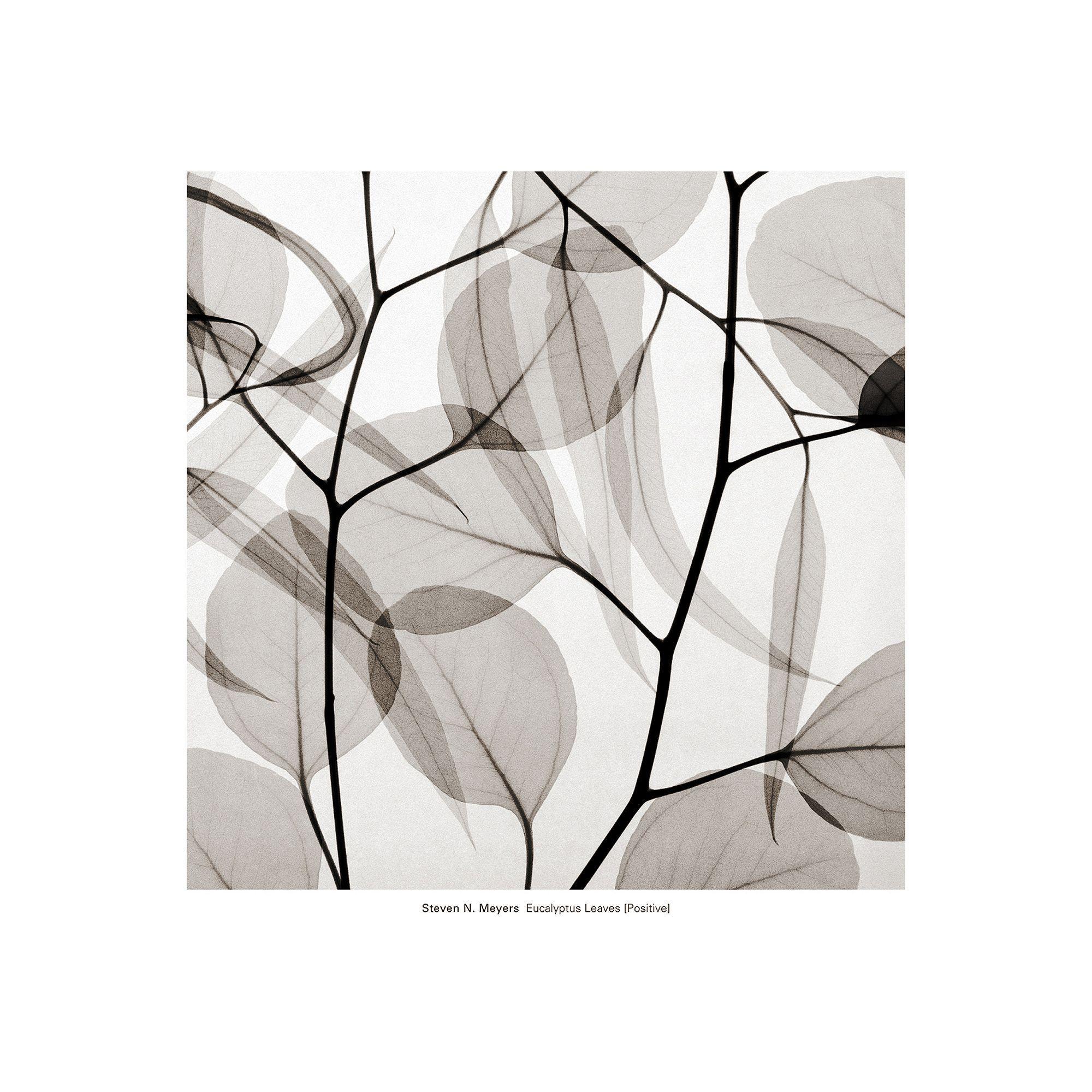 Art.com Eucalyptus Leaves (Positive) Wall Art Print, Black