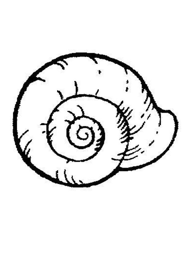 Sea Snail coloring page. Nice coloring sheet of sea world. More ...