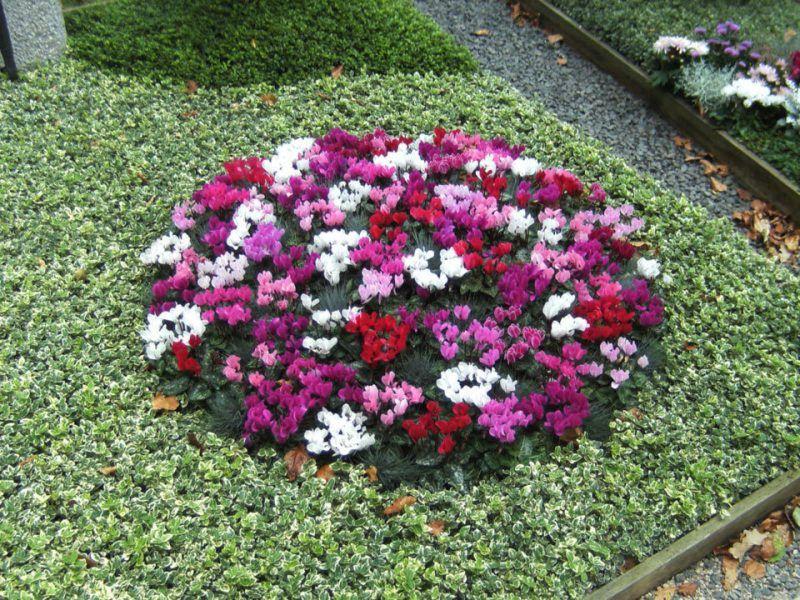 Was soll ich als Grabbepflanzung benutzen? - Haus Dekoration Mehr #friedhofsblumen