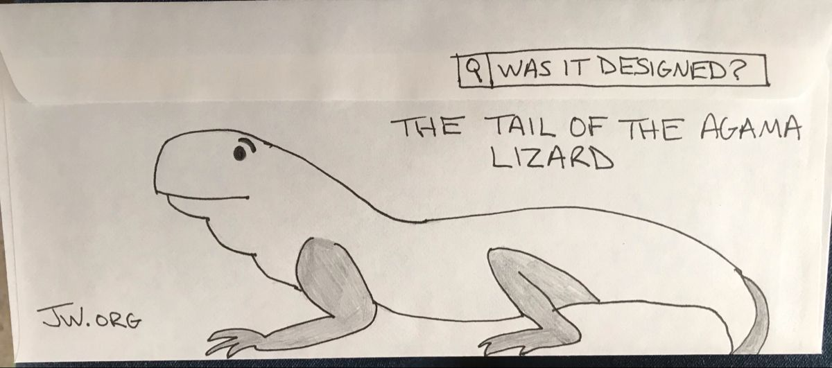 The Tail Of The Agama Lizard Was It Designed In 2021 Lettering Envelope Design Design
