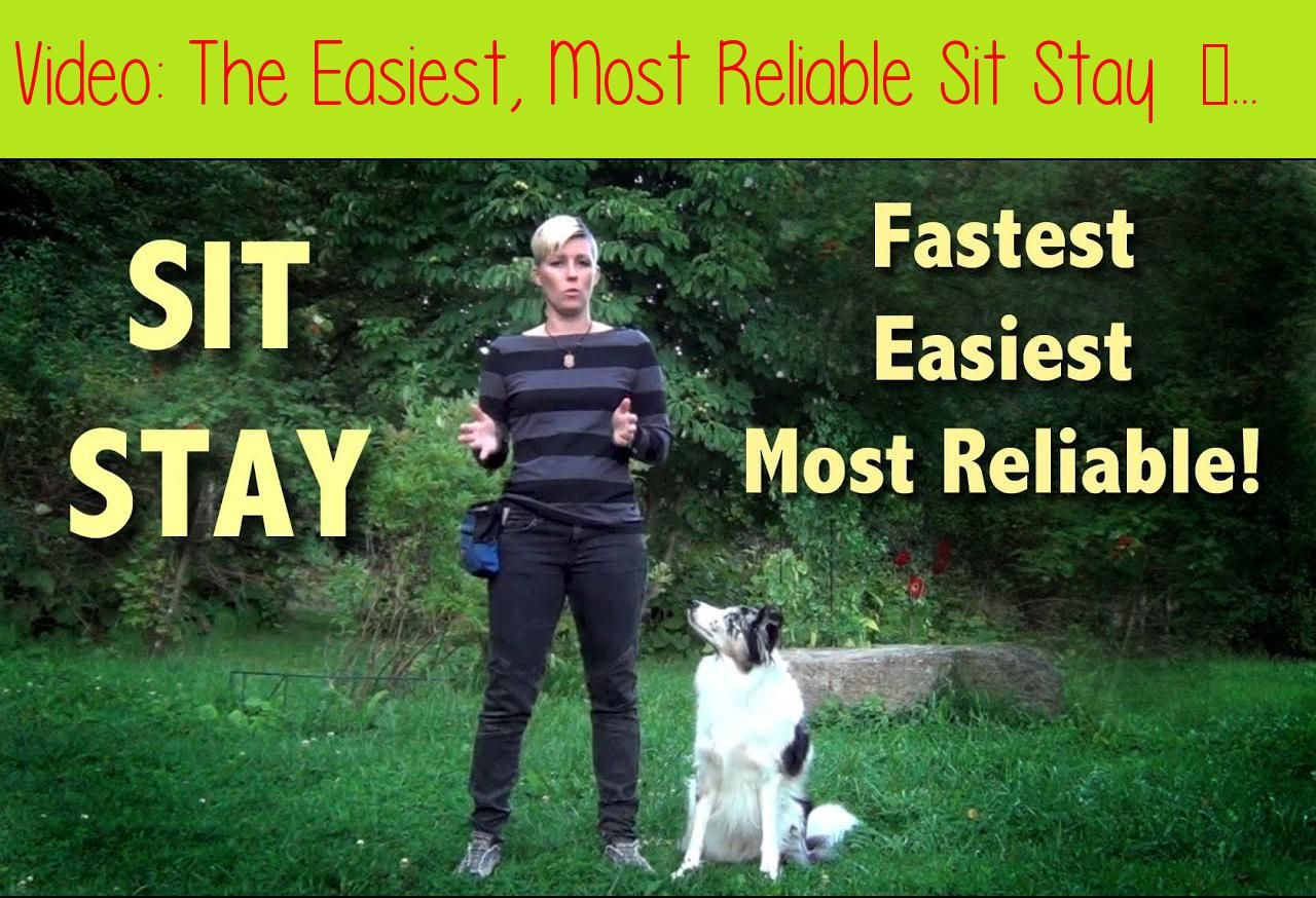 The Easiest Most Reliable Sit Stay Sit Stay Training Sit Stay