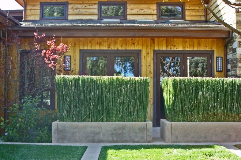 Privacy Fencing with plants for home