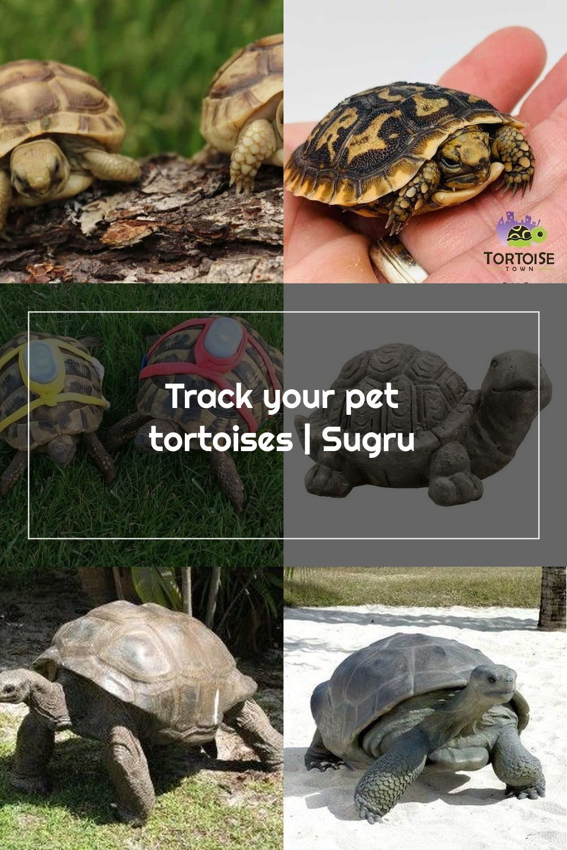 Pin Na Tortoises