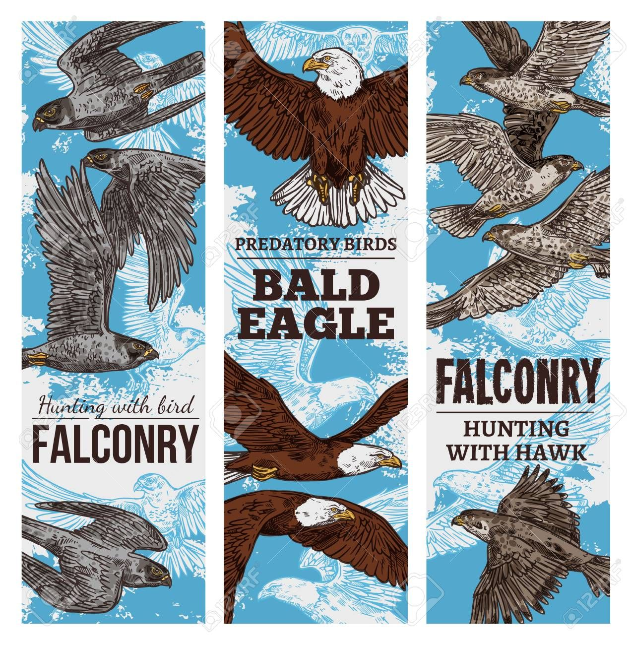 Eagles Falcons And Hawks Predatory Birds Sketch Vector Falconry Or Falcon Hunt Banners Of Vulture Birds Of Prey Or Bald E In 2020 Bird Hunting Bird Sketch Bald Eagle