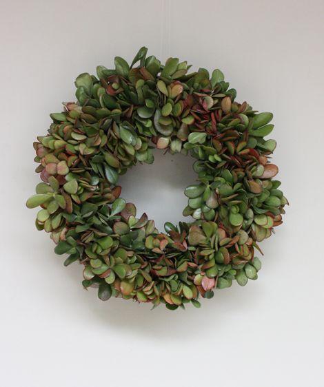 jade plant succulent wreath pinterest par mois couronnes et boule. Black Bedroom Furniture Sets. Home Design Ideas
