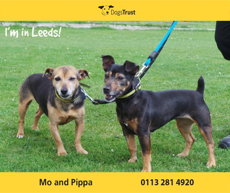 Mo Her Little Sister Pippa At Dogs Trust Leeds Are Looking For A Home Together They Are Full Of Beans Super Fun And Would Like Dogs Dog Waiting