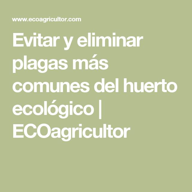 Evitar y eliminar plagas más comunes del huerto ecológico | ECOagricultor