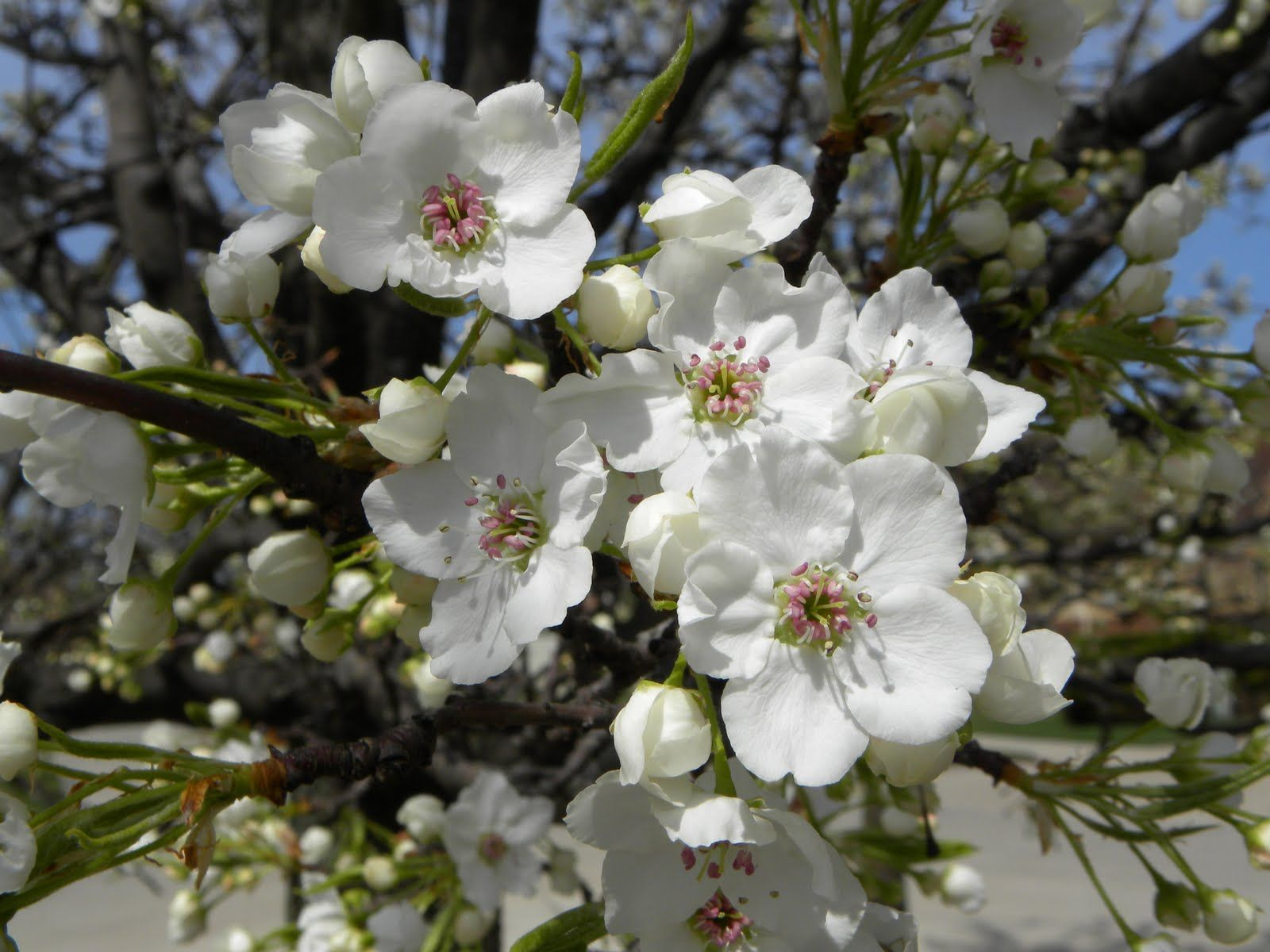 Flowering Tree Identification Flowering Trees Are The Epitome Of