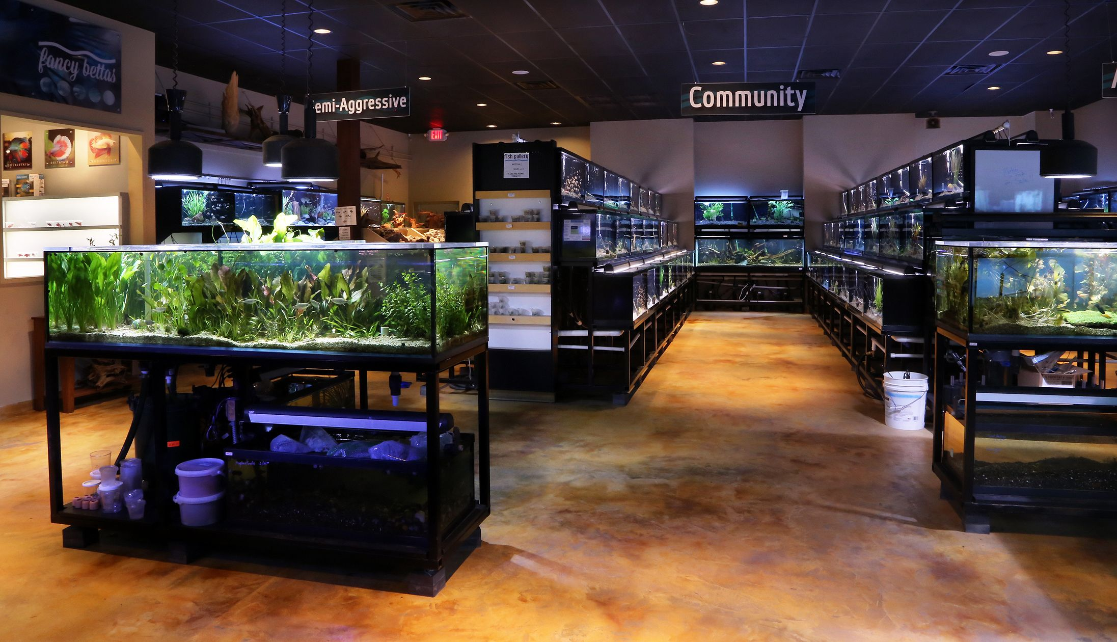 Freshwater Fish Department Aquarismo