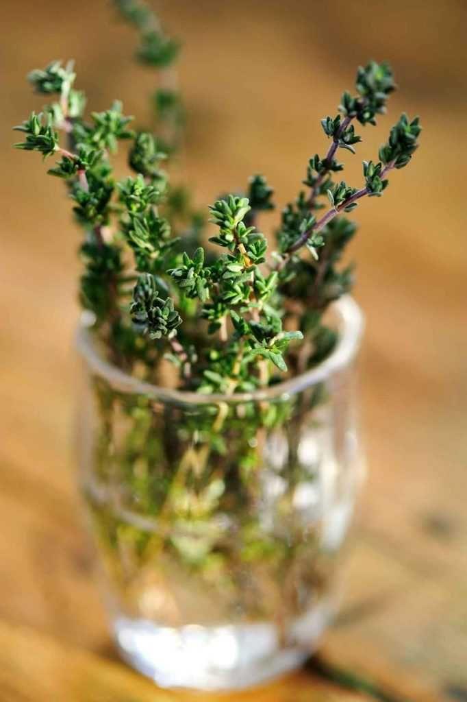 le thym cultiver planter tailler potager jardin. Black Bedroom Furniture Sets. Home Design Ideas