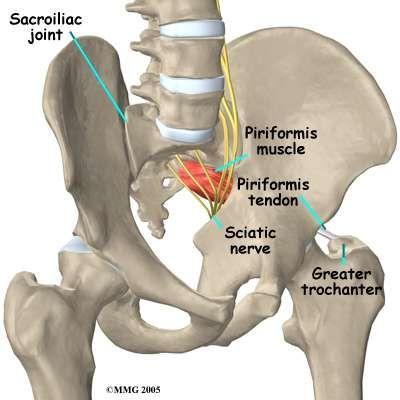 Vista anterior de la pelvis   ANATOMIA   Pinterest   Anatomía