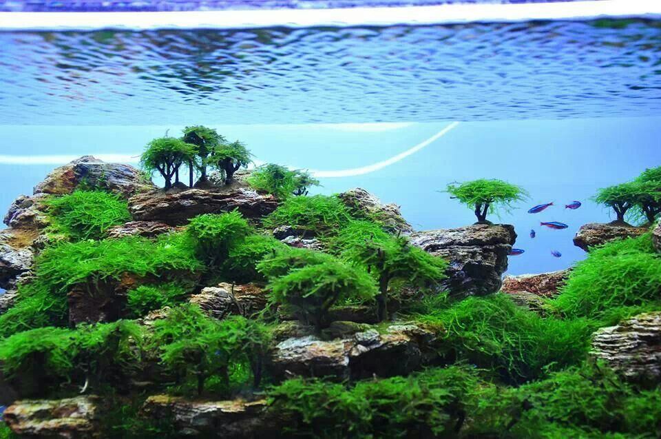 Landschaft AWESOME AQUASCAPES Pinterest Landschaften - deko fur aquarium selber machen
