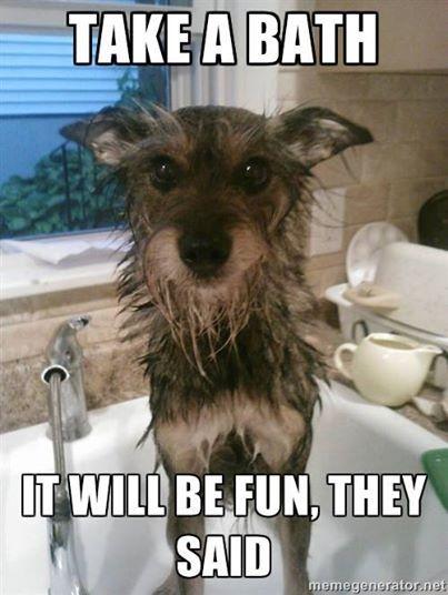 Sally The Wonder Dog Doesn T Like Baths Sallythewonderdog