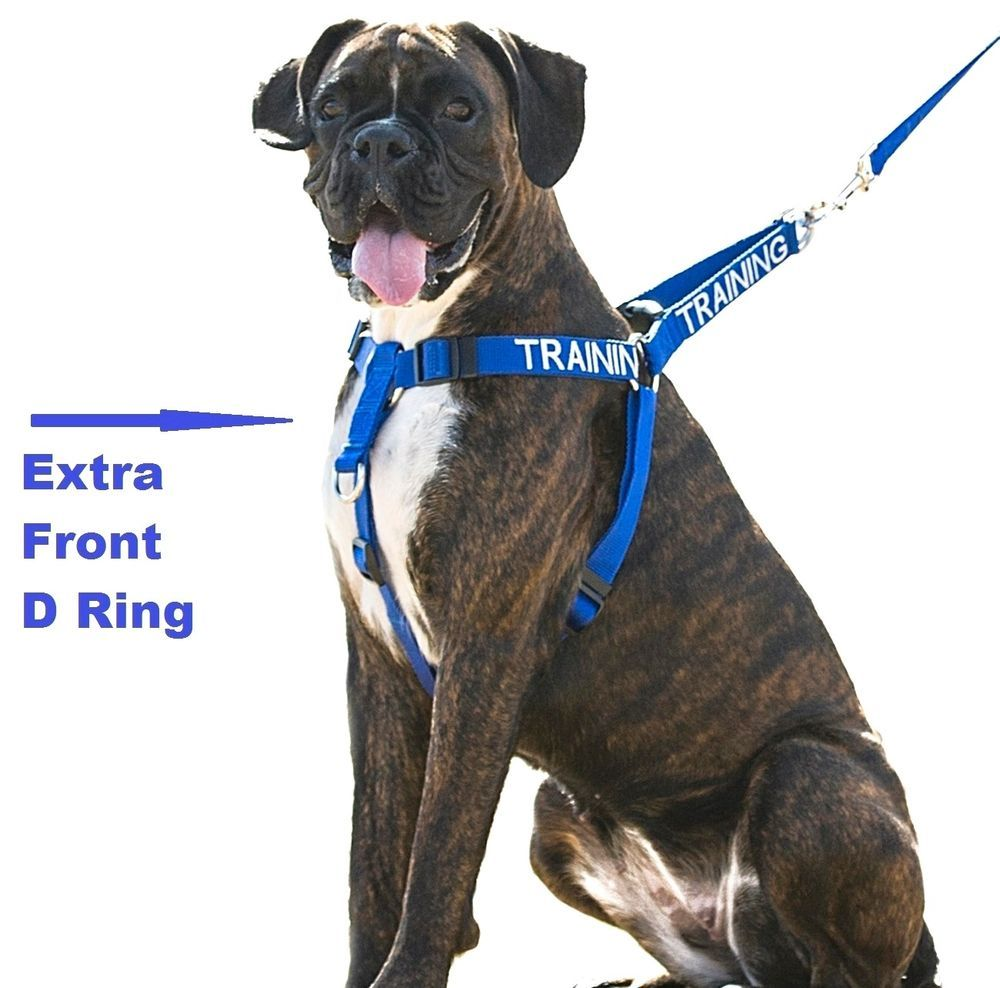 Heavy duty dog harness with front d ring or hands free