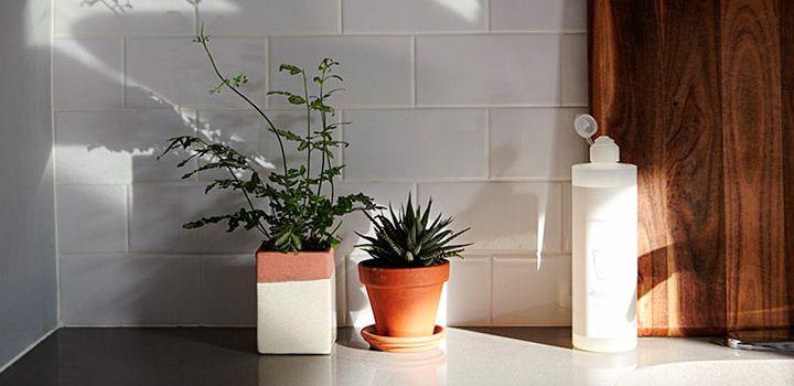 83 |Kitchen Plants| ideas | kitchen plants, plants, sweet home