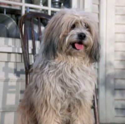 Jack Was Laura Ingalls Scruffy Lovable Dog Who Appeared In