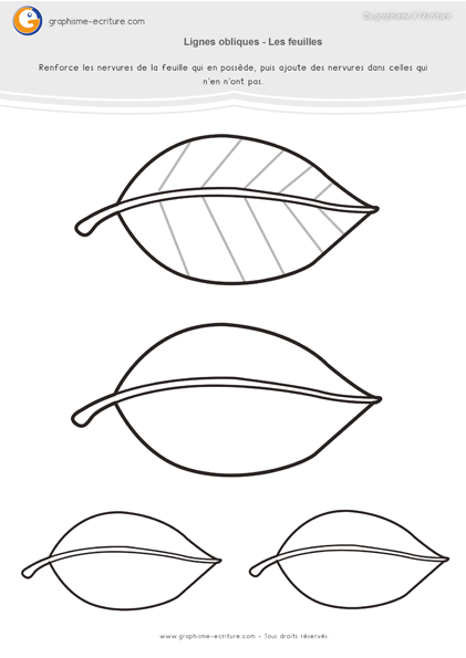 graphisme ms lignes obliques   les nervures des feuilles