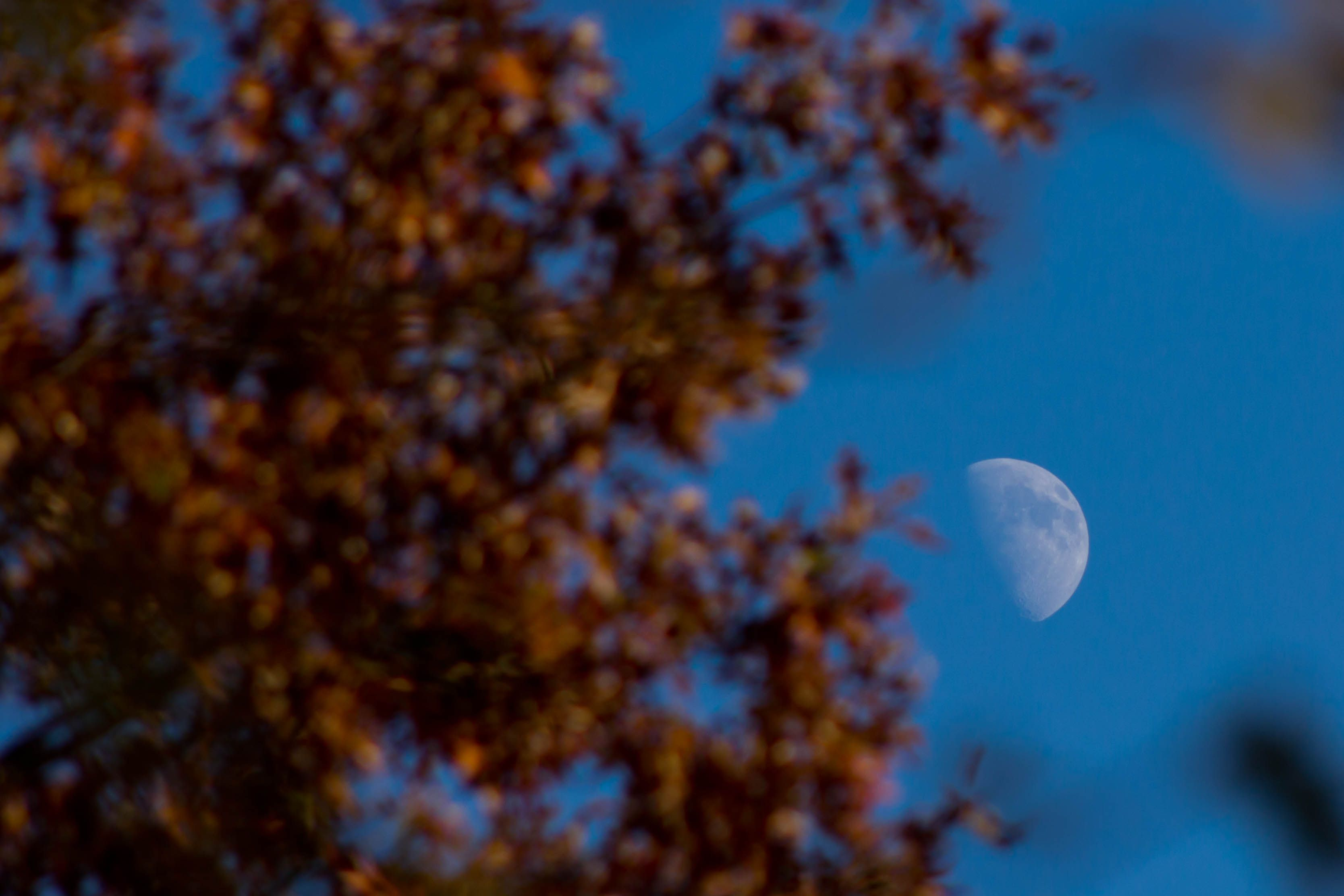Day 313  So I saw the moon out today while outside. I thought I would try to get a shot of it with some fall colors around it. Don't think it turned out the way I was hoping it would but still kind of neat