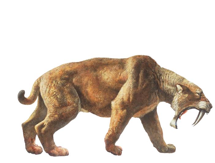 Saber Tooth Cat Png 702 532 Prehistoric Animals Smilodon Megafauna