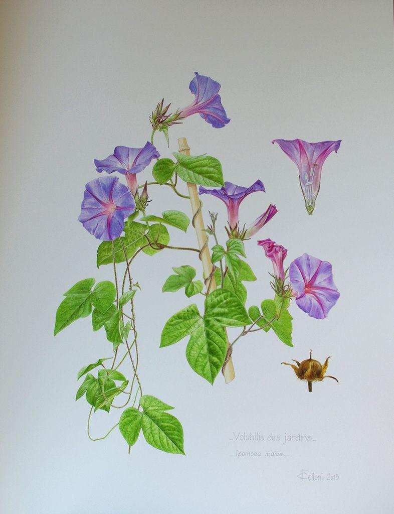 aquarelle bota clairefelloni le blog met en ligne des cours d 39 aquarelle botanique il parle de. Black Bedroom Furniture Sets. Home Design Ideas