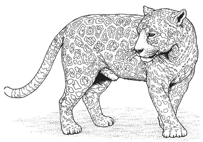 Panther Coloring Pages Cat Coloring Page Zoo Coloring Pages