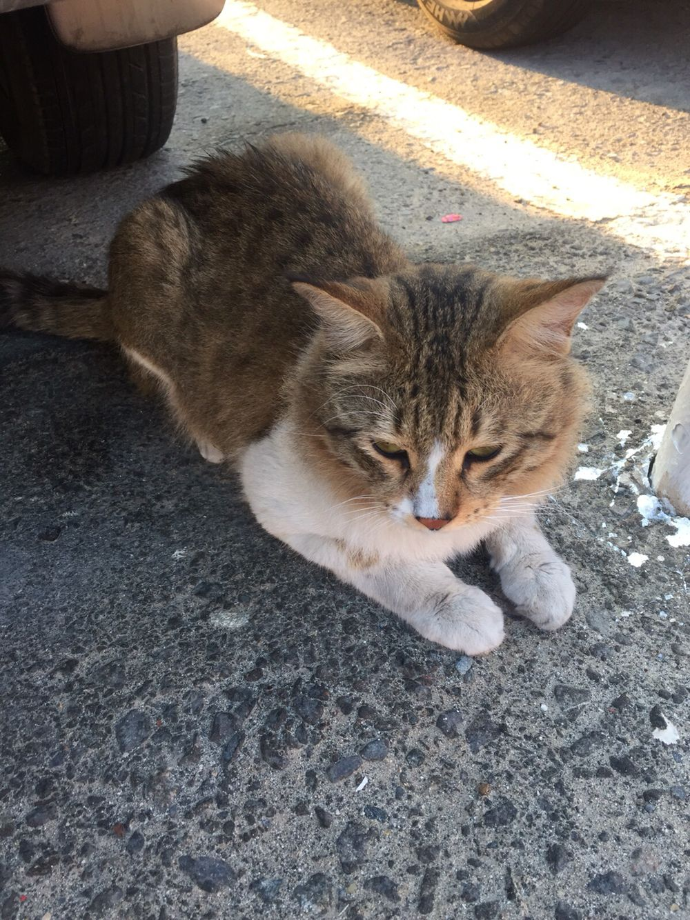 Bur Dubai Feral cats, Animals, Animals of the world