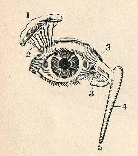 Eyes #eye   Thanks   Pinterest   Diagramm, Auge und Kunstunterricht