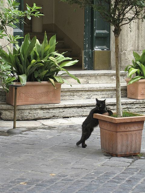 The Black Cat of Rome by Rob Shenk, via Flickr