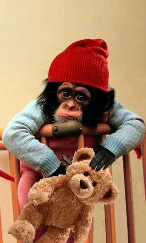 Maymun çok Tatlı Değilmi Hayvanlar Cute Baby Monkey Animals