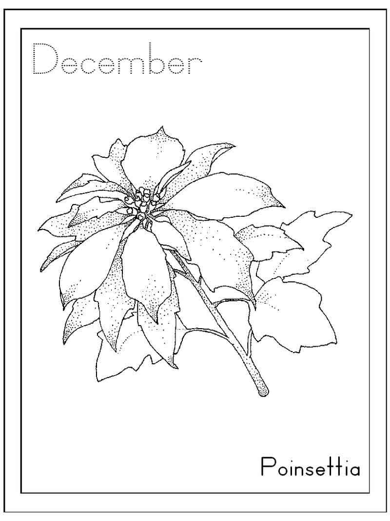 Coloring Pages Of Poinsettia in 2020 Coloring pages