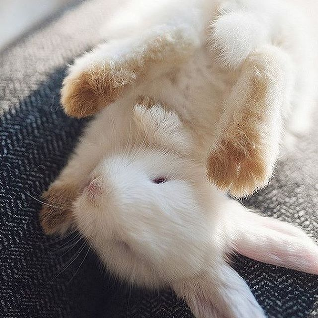 Comment if you love bunnies ❤️️❤️️ #instagood #cat #FF