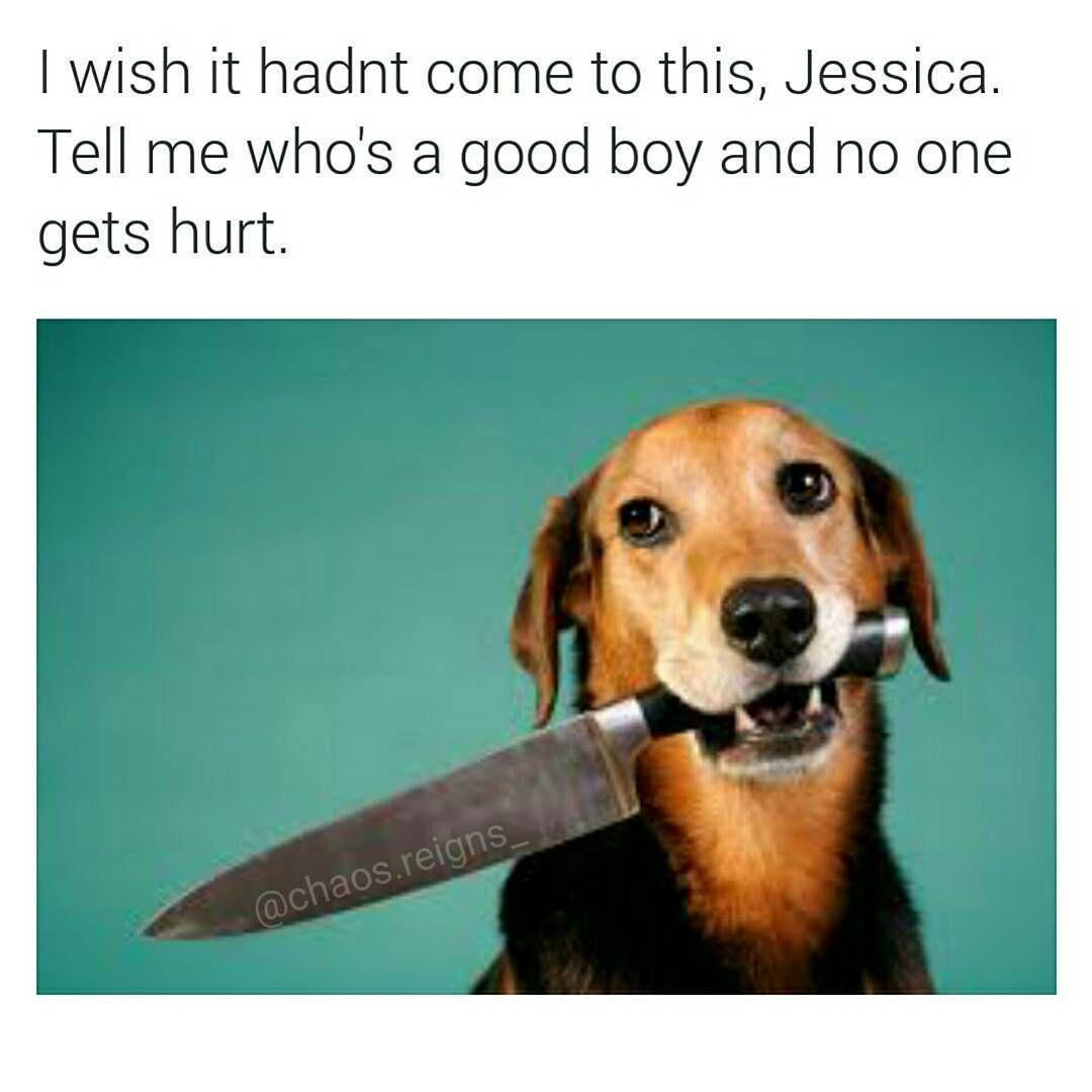 Lustige Tierbilder Des Tages 23 Bilder Bilder Lustige Tages Tierbilder On Dogs Animal Jokes Funny Animal Jokes Funny Dog Memes