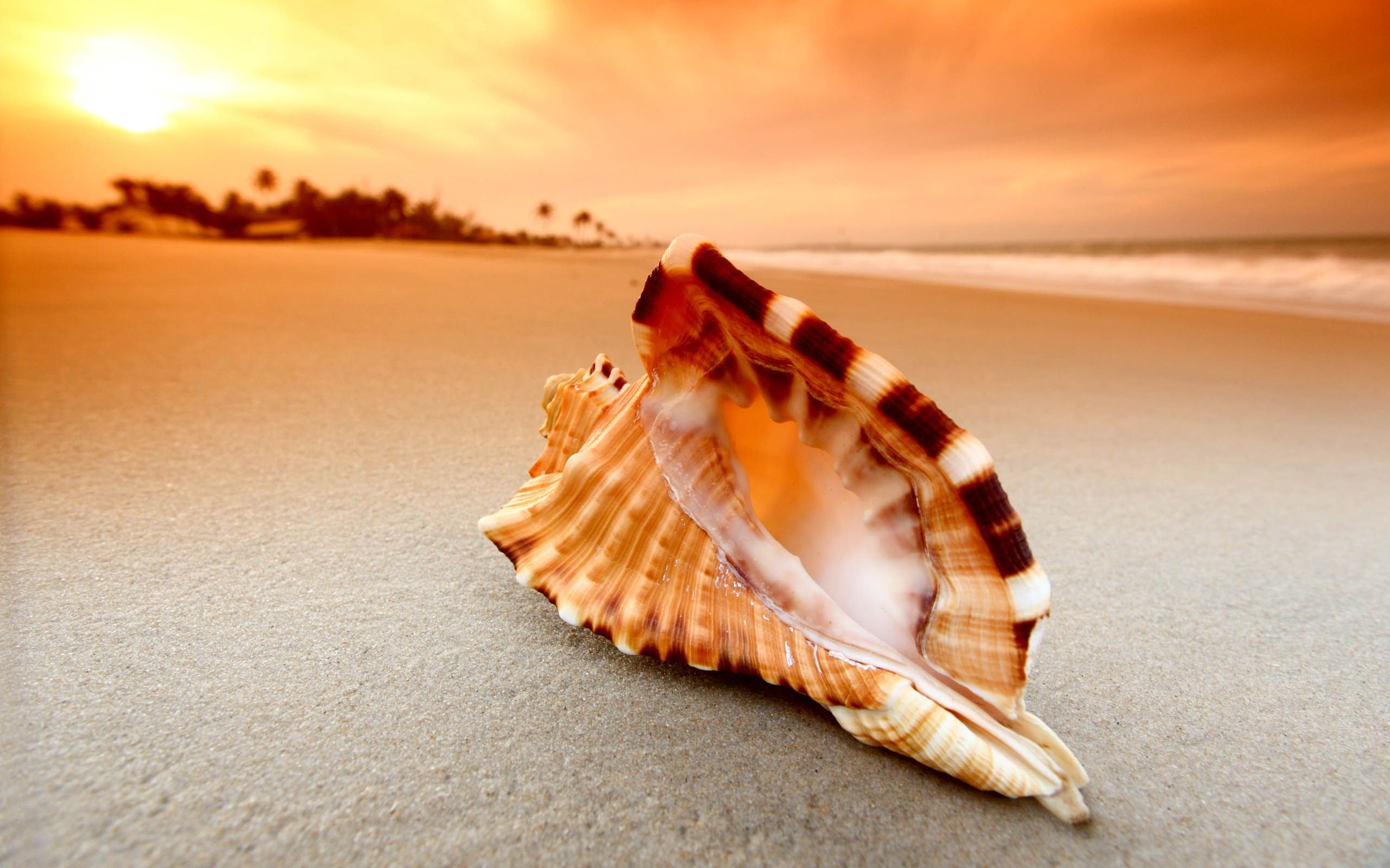 Shell Awesome Hd Wallpapers 2015 High Quality All Hd Wallpapers Hd Cool Wallpapers Hd Wallpaper All Hd Wallpaper