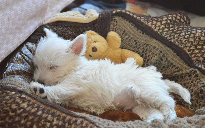 Download Wallpapers West Highland White Terrier Little Fluffy Dog White Puppy Cute Animal Sleeping Dog Besthqwallpapers Com Westie Puppies Fluffy Dogs Westie Dogs
