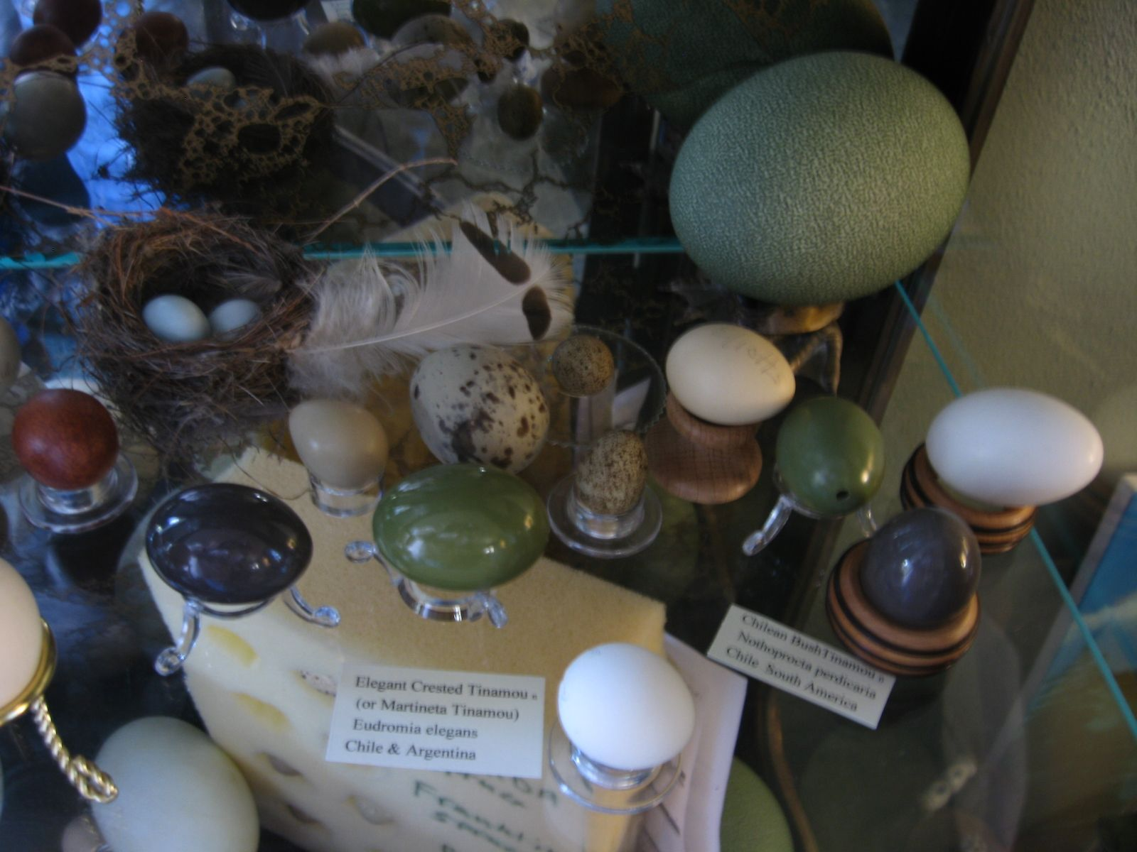 Misc Blown Eggs Including Cassowary Large Green Far Right Elegant Crested Tinamou Shinny